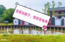 弋阳国际文学村,座落在江西上饶市弋阳县龟峰脚下,一个叫江廖肖的村落里。整个村落依山傍水,空气清新。一