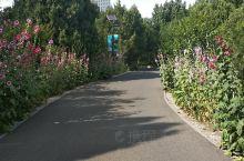 紫薇路 千佛山除了正门一路上山的台阶之外,还有许多上山路径供游人和园区内电瓶游览车通行。 图中是千佛