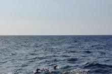 美瑞莎海滩,海豚和作秀