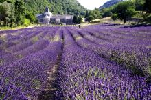 法国. 普罗旺斯薰衣草。 南法普罗万斯全程自驾七日周游~薰衣草游。 被薰衣草包围着,我们住的家庭旅馆