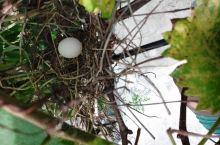 菜地裏的鳥巢,瓜果。學習使用農耕機器,農忙不亦樂乎!