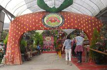 马来西亚金马仑草莓园