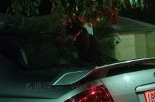 一只黑猫,哈哈哈,只能看到眼睛