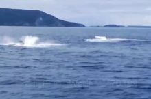 凯恩斯观鲸。冬天的时候,6-10月,在大堡礁出海,有可能看到鲸鱼,很值得