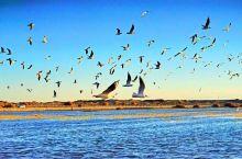 居延海的清晨: 额济纳这一行不会错过居延海,去居延海又主要是朝拜初升的太阳。 远远地望见那片红霞,不