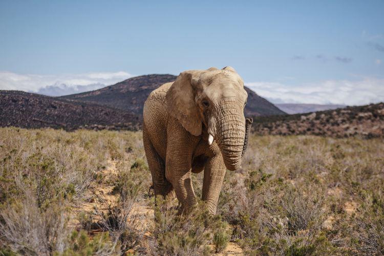 Aquila Private Game Reserve - Day Trip Safari1