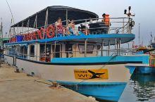斯里兰卡是世界上最好的观鲸地之一,每年鲸鱼会在孟加拉湾和阿拉伯海之间迁徙,途中会路过该海域。11月至