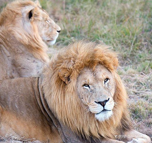 Lion & Safari Park1