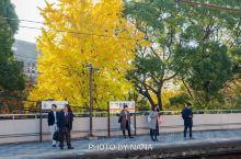 鹤舞公园是1909年  名古屋  市修建的第一个城市公园 园内以染井吉野樱为主,种有大约1000棵樱