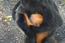 可爱的猴子🐒