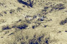 阿拉善西部这片苍茫的大地,常年干旱少雨,风沙肆虐。因了这苍凉,生命愈发顽强壮美。