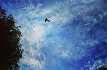 原始时光保留地-山打根雨林探索中心  为了满足孩子的愿望,乘着暑假一家人来到了山打根雨林探索中心,我