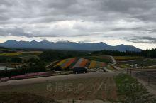 四季彩丘。 说到北海道的四季彩丘还是很有名的,而且去过的都说值得一去,因此这趟北海道之旅特意安排了行