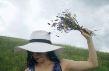 夏天的草原太阳炙烈,清风凉爽,风吹草低见牛羊……