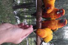 喂个鹦鹉喜不喜欢         马泉休闲园里有一个鹦鹉长廊,可以和鹦鹉们互动,喂食,逗乐,他们还会