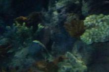 #海洋世界.海底隧道#