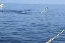 海豚湾之一-菲律宾宿雾海豚湾名不虚传! 今年暑假在菲律宾宿雾,看海豚绝对是我们此行最大的收获之一!