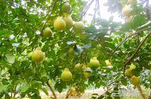推荐一个小众旅行地____黎平县,近几年贵州黎平县鼓励侗寨村民在家创业,大面积种植有价值的中药材、蔬