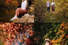 谁说看枫叶必须出国~10月和11月是本溪关门山的红叶最美的季节,刚打过霜的枫叶最红!拍照能够置身其中