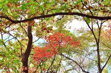 秋色入相框,天然是画卷
