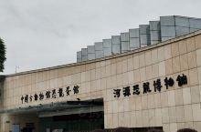 河源恐龙博物馆建筑面积8300平方米,展览面积3100平方米,入场门票(全票)RMB.30元。一楼进
