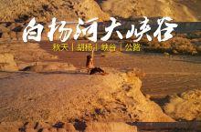 新疆·白杨河大峡谷 胡杨林!荒漠戈壁!大峡谷!这儿全有!!必须来啊!  惊喜从天而降 秋天来新疆自驾