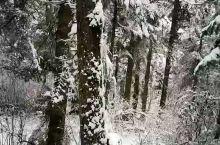 风雪黄龙路