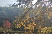 在进入塔川村子前会经过一片古树林,一到秋天这里就是一大幅色彩斑斓的油画,来这拍摄的人很多,平时安静的