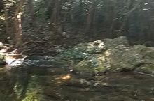 这是钦州八寨沟的一个景点。在八寨沟里像这样的景点,沿着水泥小路一直走,几乎都是这样。都是清澈的溪水,