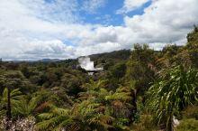 打卡毛利地热文化村。导游说:这个地热喷发不定时喷,不一定能看到,奇异鸟也是一样的难得一见。我们的运气