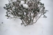 第一次接触雪