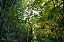 阳光下的世界 光州是个不出挑却温柔宽厚的地方,潭阳竹林、无等山都没有令人惊叹的绝景,细细品味能体会生