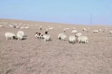 玩的很开心!沙漠、草原、羊群还有美食!