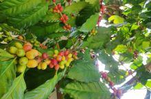 中国第一个本土咖啡品牌——后谷咖啡。 地址 后谷咖啡有限公司(芒市速溶咖啡粉分公司)    后谷咖啡