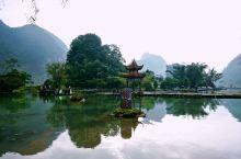 广西靖西   行走在金黄色与青绿色之间的奇妙境地 在广西靖西地鹅泉,穿梭在一望无垠的快要成熟的金黄色