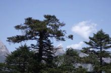 心里一直有个梦想,就是想翻越陇南第一峰-----海拔4154米的雷古山.今年端午节终于如愿以偿了。