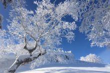 大秃顶子山 浓浓东北味的名字 厚厚的积雪 带来不一般的视觉冲击  三段式登顶 雪地摩托 履带车 步行