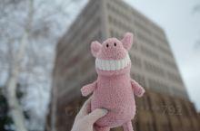 #北海道大学Hokkaido University 打卡 临走当天起了大早,因为住在札幌的mysta