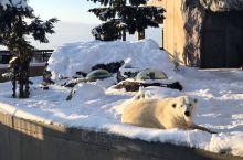 北极熊、北极狐、企鹅、白色猫头鹰……小朋友们的最爱
