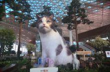 首尔仁川机场内的大老虎