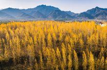 陕西西安长安区沣峪口,秦岭山中秋色迷人,红叶把三面佛映衬得更加美丽。随着秋进深处,秦岭的秋色越来越迷