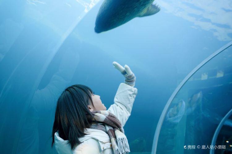 Sapporo Maruyama Zoo2