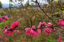 桃花红,春风荡,又是一年好时节