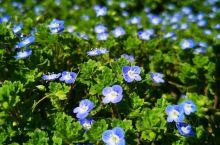 不知名的野花 感恩我们还能默默盛放 原野的风和树 祭奠那些飘荡在原野上的过往 墙角的青苔   是春天
