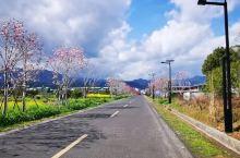 《来自大邑的诱惑:我真的想要去旅游……》  我是孤独浪子,希望我的拍拍让您有所收获。 漫游神州31载