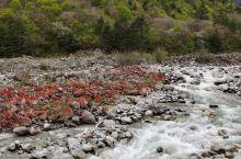 巍巍贡嘎雪山之下,滚滚贡嘎拉曲之滨,有一片方圆数平方公里的河滩,散落着一堆堆红玛瑙般的石头,在阳光照