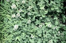 漂亮的野花