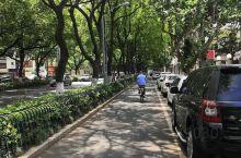 最爱宜兴这条老街,路虽窄但却不堵,绿树成荫。