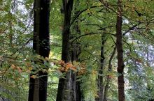 荷兰和德国边界最美的乡野徒步路线N70-色彩斑斓的秋景全浓缩在这里N70, the most bea