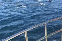 大家见过太多温室里的海豚了,这个可是阿曼很出名的深海海豚,可以说是最自由的玩耍,这个可以说看缘分的哦